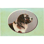 PFB Vintage Postcard of Newfoundland or St. Bernard Dog