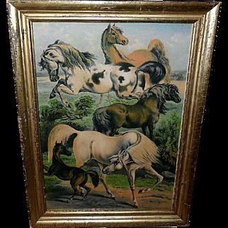 Large Color Lithograph of Horse Breeds - Lemon Gold Frame