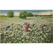 Black Americana Postcard of Cotton Pickers