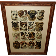 Raphael Tuck Large Embossed Chromolithograph Die Cut of Dog Breeds
