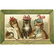 German Postcard of Three Cats in Frame