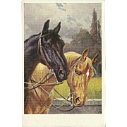 Two Noble Horses German Postcard by R. Trache