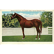 Vintage Linen Postcard of North Star the Wonder Horse in Kentucky