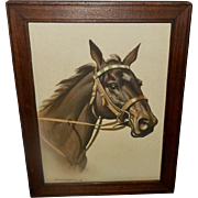 Koekkoek Vintage 1939 Print of Handsome Brown Horse