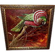 Chromolithograph of Hawk Headed Parrot by L. Roch