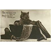 Happy Birthday 1929 Postcard with Kitten in a Purse