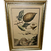 Borghese Volckamer Botanical Print in Lemon Gold Frame - 2 of 2
