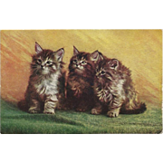 Vintage Postcard of Three Long Haired Kittens