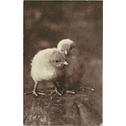 C.E. Bullard 1906 Undivided Photo Postcard of Two Chicks