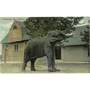 Vintage Postcard of Elephant at the Buffalo, N.Y. Zoo