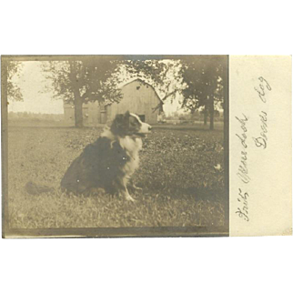 Real Photo Postcard of a Shepherd Dog in Countryside