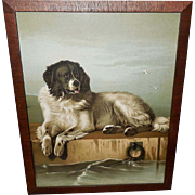 Chromolithograph of Newfoundland Dog by Sir Edwin Landseer