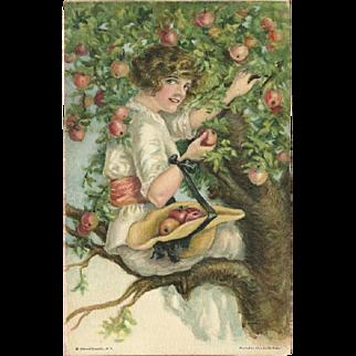 Alice Fidler Vintage Postcard of Lady Picking Fruit
