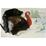 Oh, Turkey Feathers!  Postcard Real Feathers