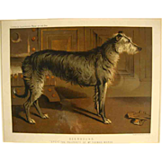 """Deerhound"" from Cassell's ""The Illustrated Book of the Dog"""