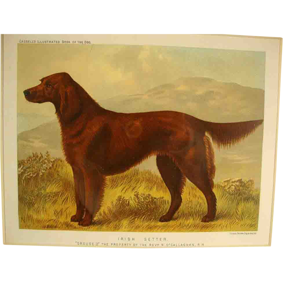 Quot Irish Setter Quot Cassell S Illustrated Book Of The Dog