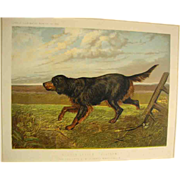 """Gordon Setter"" , Cassell's Illustrated Book of the Dog"