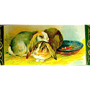 Pretty Winsch Easter Postcard—Colorful Rabbits Snuggle Together