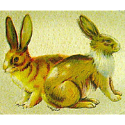 Pretty Rabbits Posed Inside Cream Colored Egg Postcard