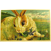 German Easter Postcard -  Large White & Ginger Bunny Rabbit (1 of 2)