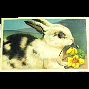 Pristine German Easter Postcard - Large Black & White Rabbit (2 of 2)