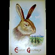 Stecher Easter Postcard - Large Rabbit's Head