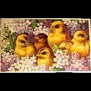 Beautiful Unused German Easter Postcard - Chicks Among Purple Flowers