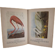 Audubon's Birds of  America Hard Back Book Popular Edition 1950