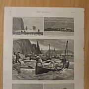 Whale Fishing In The Faroe Islands - Full Page The Graphic 1887