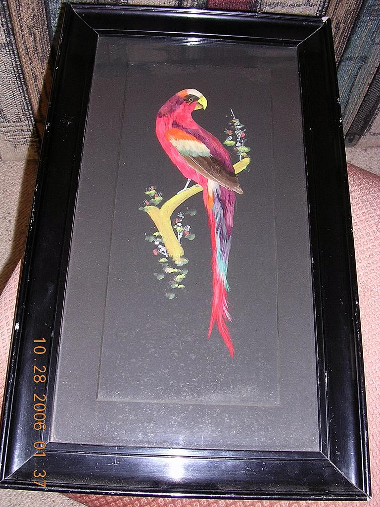 "Gorgeous Antique Feather Art  ""Parrot Picture"" Circa 1700-1800"