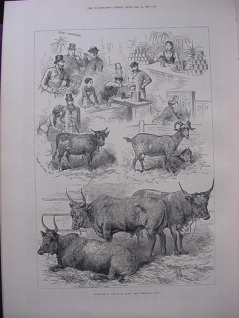 'Sketches At The Dairy Show' - Illustrated London News Sept. 24 1881