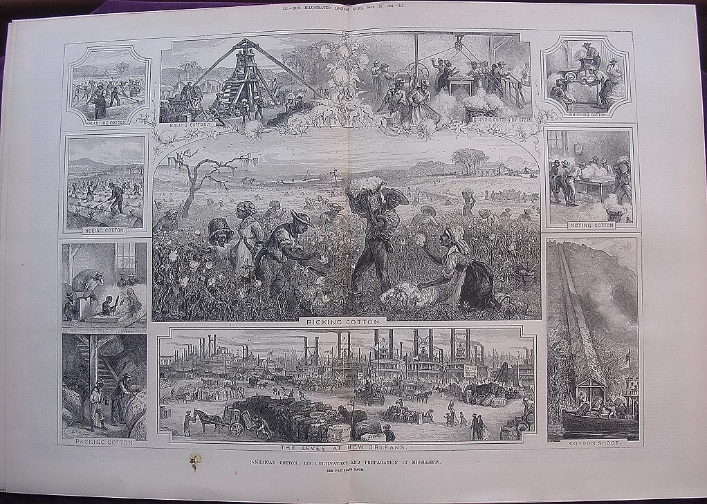'AMERICAN COTTON: Its Cultivation And Preparation In Mississippi' - Illustrated London News Sept. 24 1881