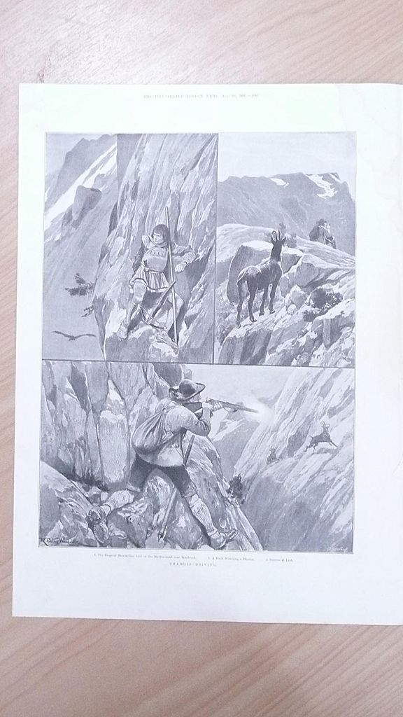 "Full Page Illustrated London News  1895 ""Chamois Driving"""
