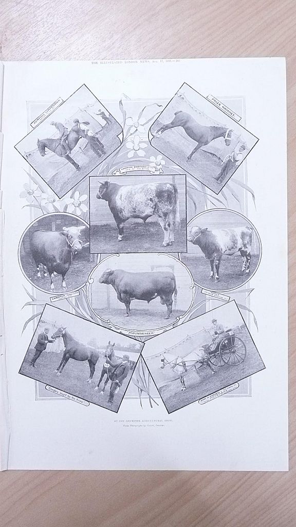 "Full Page Illustrated London News  1895 "" At The Leicester Agricultural Show"""