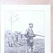 "Full Page Illustrated London News  1895 ""Partridge Shooting"""