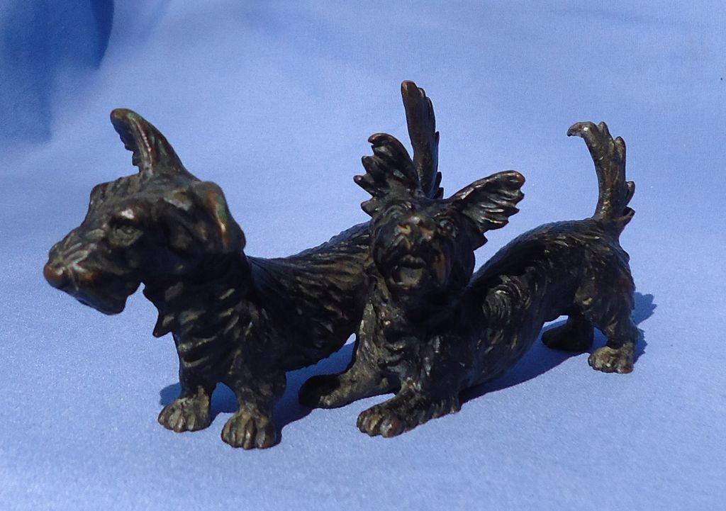 "bronze Skye Silky terrier Austria 5"""