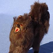 "antique brown Spitz Pomeranian salon dog French fashion doll Germany 2"""