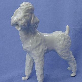 """1950s white Poodle Augarten Austria 6"""""""
