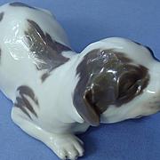 """newborn brown pointer  puppy Royal Copenhagen Denmark dog 7"""""""