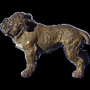 Vienna bronze English Bulldog