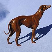 bronze Whippet Italian Greyhound dog