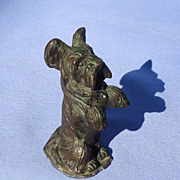 bronze Skye Silky terrier Briard