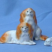 1930s Cavalier King Charles spaniel Germany