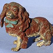 Cavalier King Charles Spaniel Heyde Germany