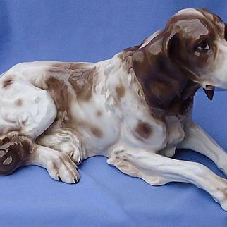 "15"" English Setter Springer spaniel German pointer Czechoslovakia hunting dog"
