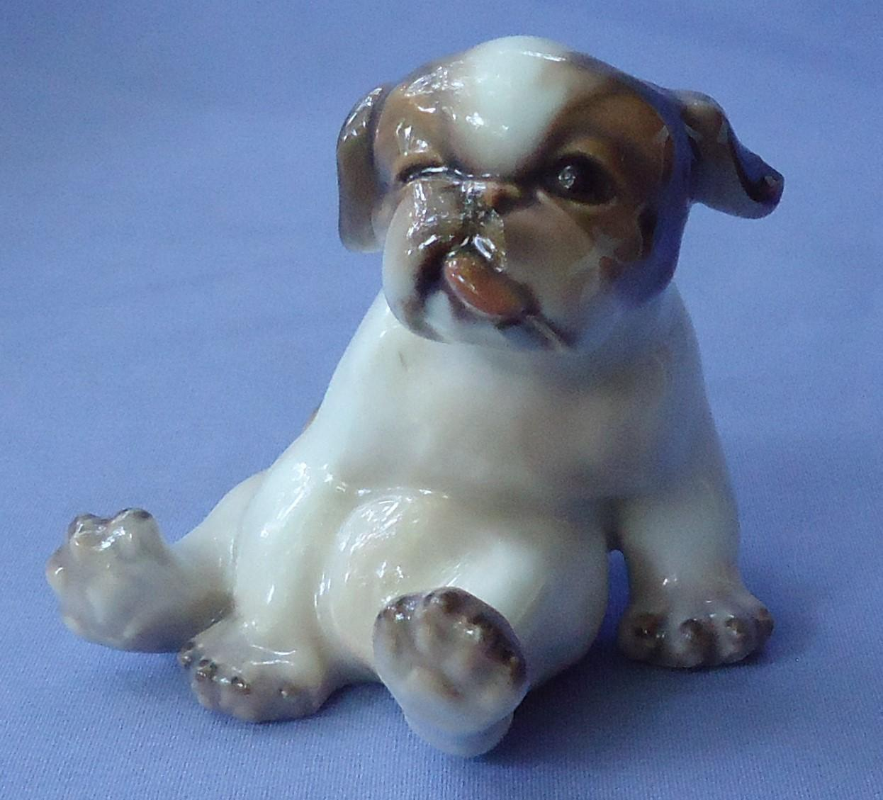 English Bulldog puppy Dahl Jensen Denmark