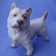 "West Highland Cairn Norwich terrier Dahl Jensen Denmark dog  6"""
