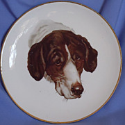 old Dresden plate German Shorthaired pointer Retriever spaniel