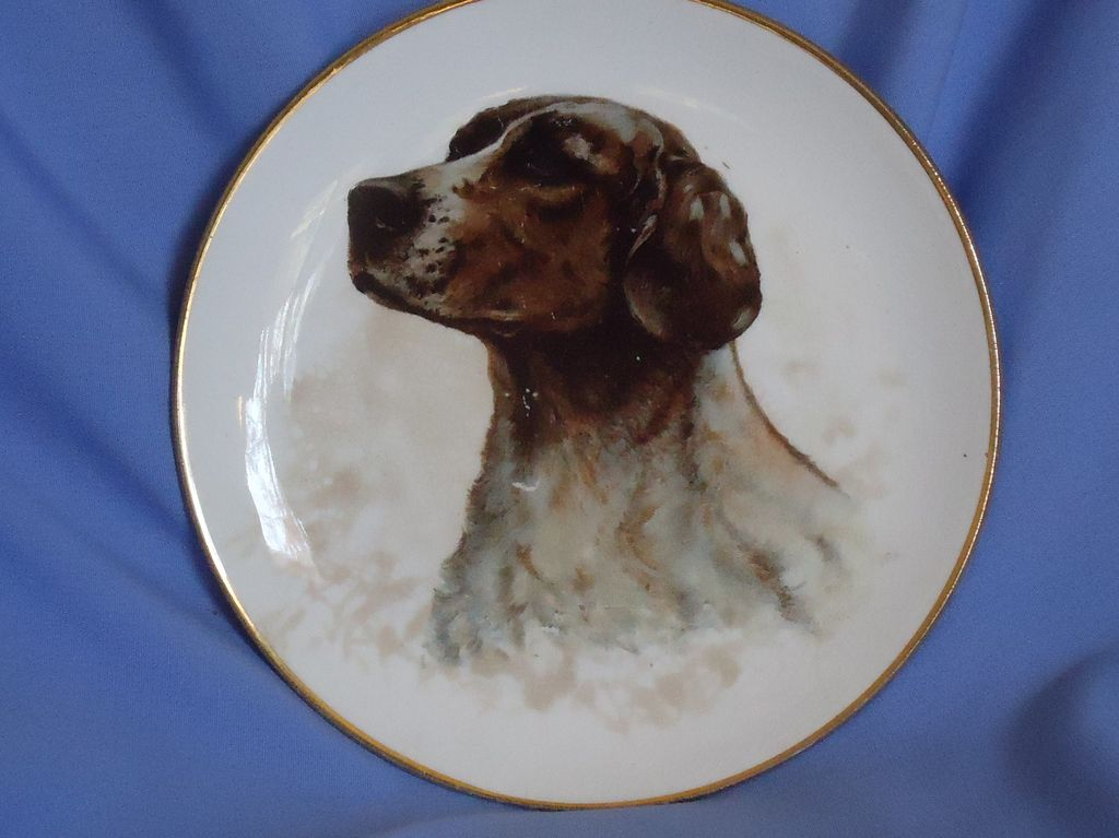 old Dresden plate German Shorthaired pointer