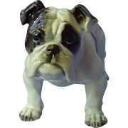 1930s English Bulldog Rosenthal Germany 7""